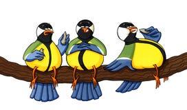 Trois oiseaux de poids excessif mangeant des graines Image libre de droits