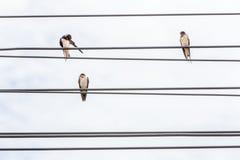 Trois oiseaux se reposant sur les lignes de câble électrique et le backg de ciel nuageux Photos stock