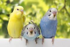 Trois oiseaux sont sur un fond blanc Image libre de droits