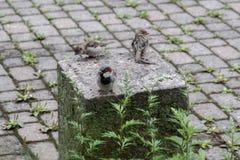 Trois oiseaux sur un socle photos stock