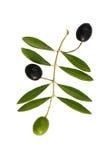 Trois olives Images libres de droits