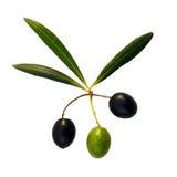 Trois olives et trois lames Images stock
