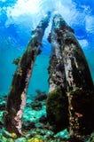 Trois ont abandonné des jambes de jetée repris par le corail naturel Image stock
