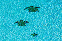 Trois ont couvert de tuiles des tortues sur le fond de la piscine Photos libres de droits