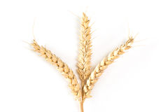 Trois oreilles de blé Image libre de droits