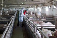 Trois ouvriers de ferme Images stock