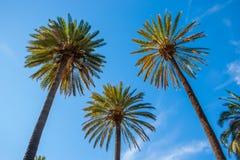 Trois palmiers Photos stock