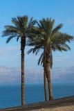 Trois palmiers sur le bord de la mer de la mer morte en Israël Images stock