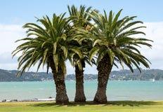 Trois palmiers sur une plage d'herbe Photo stock