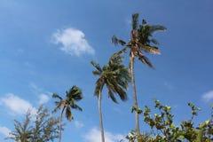 Trois palmiers tropicaux dans un paysage de rangée photographie stock