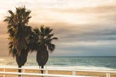 Trois palmiers tropicaux se tiennent sur la plage, la plage sablonneuse et le Th Photographie stock