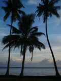 Trois paumes de plage Images libres de droits