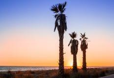 Trois paumes sur la plage dans le coucher du soleil Photos stock