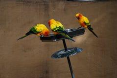 Trois perroquets Images libres de droits
