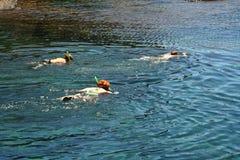 Trois personnes naviguant au schnorchel dans un bassin naturel à Lanzarote Photographie stock