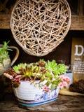 Trois petites plantes en pot sur une vieille étagère en bois photos stock