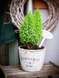 Trois petites plantes en pot sur une vieille étagère en bois photographie stock