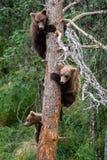 Trois petits animaux d'ours dans un arbre Image libre de droits