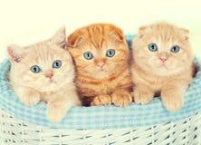 Trois petits chatons Image libre de droits