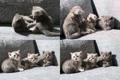 Trois petits chatons, multicam, écran de la grille 2x2 Image stock