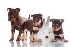 Trois petits chiots avec un lapin photos libres de droits