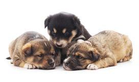 Trois petits chiots photo stock