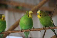 Trois petits oiseaux Images libres de droits