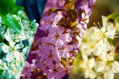 Trois photos de prune photos stock