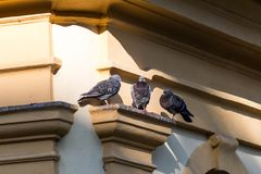 Trois pigeons se reposant sous un toit image stock