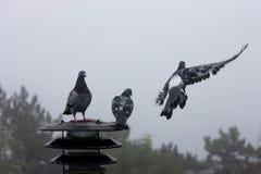 Trois pigeons se reposent sur la lanterne et regardent loin Photographie stock