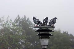 Trois pigeons se reposent sur la lanterne et regardent loin Photos stock