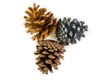 Trois Pinecone Photos stock