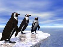 Trois pingouins Photo stock