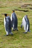 Trois pingouins de roi Image libre de droits