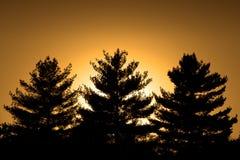 Trois pins et un coucher du soleil photographie stock libre de droits