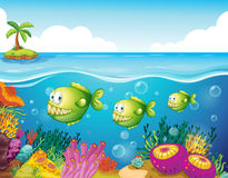 Trois piranhas verts sous la mer Images stock