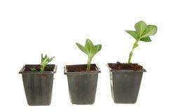 Trois plantes de centrale photos stock