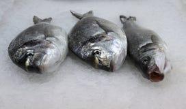 Trois poissons Images libres de droits
