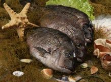 Trois poissons crus Images libres de droits