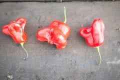 Trois poivrons de piments de Hat d'évêque rouge sur le fond en bois Image stock