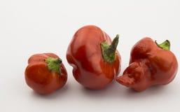 Trois poivrons de /poivron rouge d'isolement sur le blanc Photographie stock libre de droits