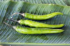 Trois poivrons verts de chèvre sur la lame de banane Image libre de droits