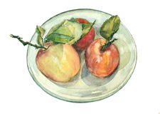 Trois pommes d'aquarelle Image stock