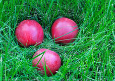Trois pommes dans l'herbe Photo stock