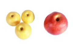 Trois pommes jaunes et une rouges Photos libres de droits