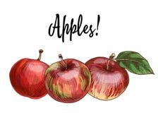 Trois pommes rouges Delicious d'isolement sur le fond blanc Illustration de collection de récolte d'automne illustration libre de droits