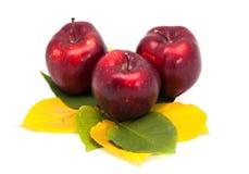 Trois pommes sur des feuilles d'isolement Photos stock