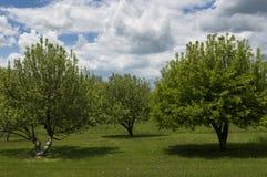 Trois pommiers au printemps photo stock