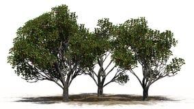 Trois pommiers différent red delicious avec des fruits Illustration Libre de Droits