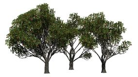 Trois pommiers différent red delicious avec des fruits Illustration Stock